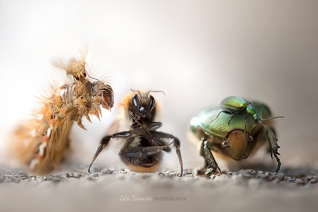 5579161034 3d3e177ef6 z 25 Insanely Detailed Macro Images Of Insects