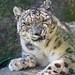 2010-08-19_Woodland_Park_Zoo_144 by Bodokitty