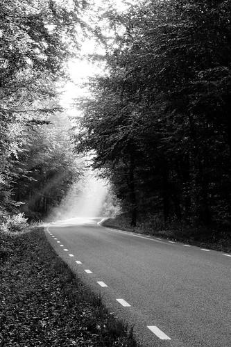 road bw tree forest blackwhite skåne sweden torup canonef50mmf14usm bokskogen