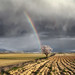 One Storm, Two Rainbows and Almond Tree