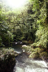 stream, rainforest, tree, rapid, river, old-growth forest, creek, body of water, watercourse, forest, natural environment, wilderness, state park, jungle, vegetation,