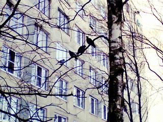 (68/365) Birds