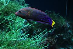 deep sea fish(0.0), coral reef(1.0), fish(1.0), coral reef fish(1.0), organism(1.0), marine biology(1.0), fauna(1.0), freshwater aquarium(1.0), underwater(1.0), reef(1.0),