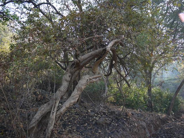 Susavi sanskrit flickr photo sharing for Terrace meaning in tamil