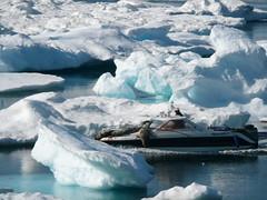 Hunting seal