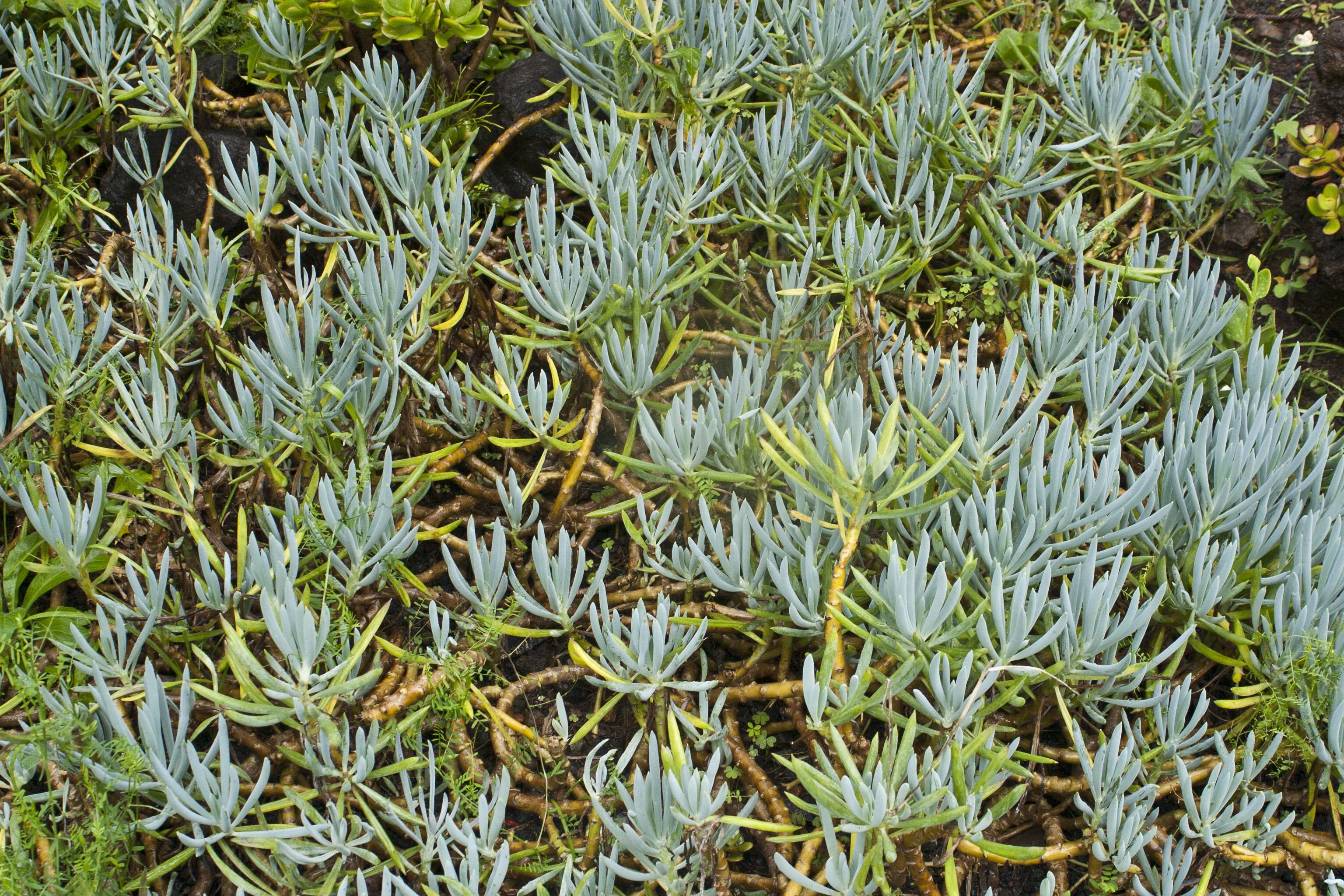 jardim plantas suculentasDe Plantas Suculentas
