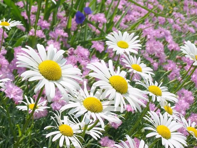 imagens jardim florido:5453740632_d68d767b58_z.jpg
