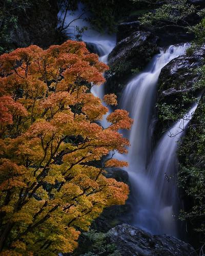 autumn summer tree photoshop bravo falls nz otago dunedin aotearoa trickery waipori