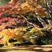 Acer Glade by Heaven`s Gate (John)
