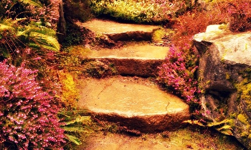 Stone Steps with Flowers