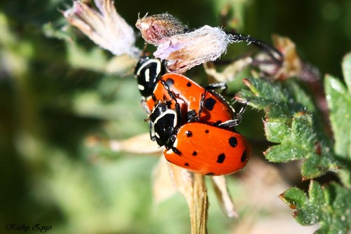 Lady bug love...