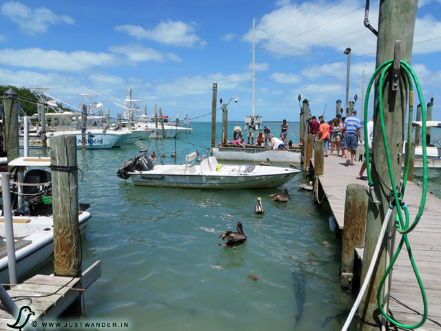 PIC: Robbie's Marina Dock - walking towards the Tarpon Feeding area