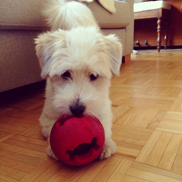 Messi living up to his name #cotondetulear