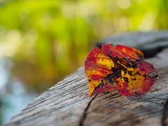Goodbye summer - Welcome autumn!