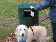 Thumbnail image for Composting Dog Poop: Yes, I'm Serious