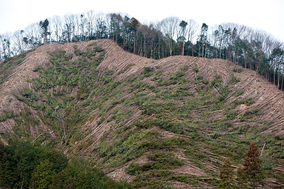 2010-03-20 mountain