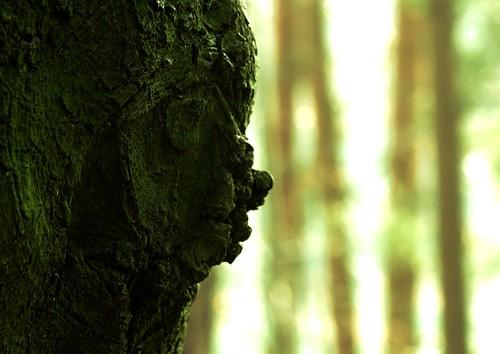 sunset tree forest sonnenuntergang wald baum waldgeist forestspirit