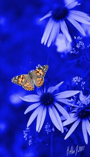 ny newyork photoshop canon butterfly bokeh adirondacks 7d upstatenewyork selectivecolor paulsmithscollege uppersaranaclake 100mmmacrof28lisusm