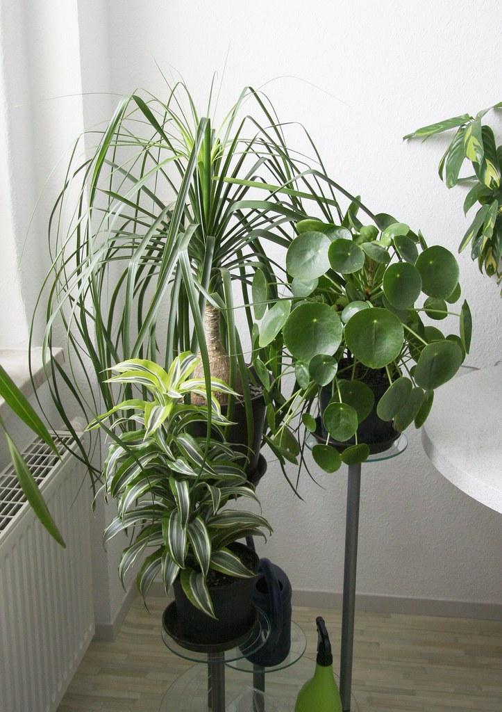Pflanzen in Küche 2