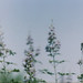 PLANTS by YAHSHEIK