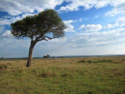 africa geotagged kenya cd ken masaimara riftvalley lolgorien cdkenyaandparis cd0708 geo:lat=127430899 geo:lon=3503711700