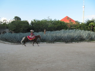 Tequila at Xcaret