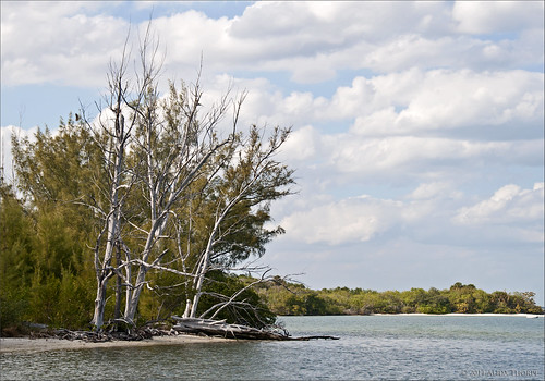 Florida Intracoastal at Hobe Sound by Alida's Photos