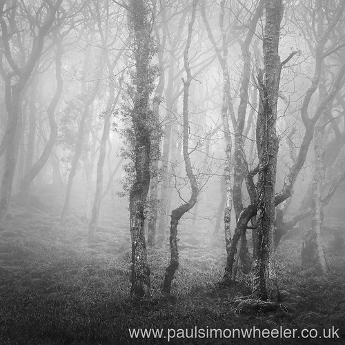 Misty Woodland, North Devon