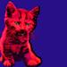Chroma Kitten