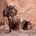 Donkey Trail Down from the Monastery - Petra, Jordan