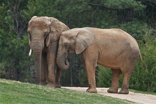 Elephant hug