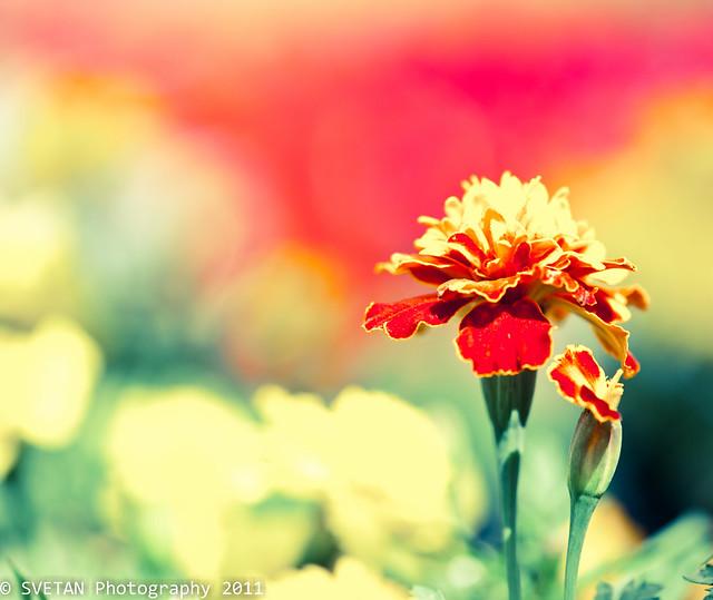 FLOWER SERMON
