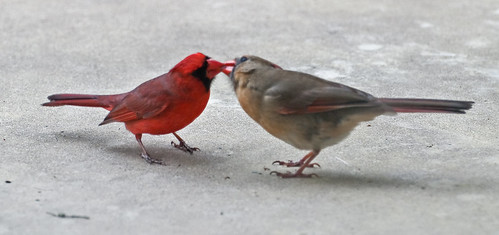 cardkiss