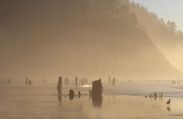 Neskowin Beach, Oregon