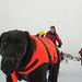 2011-02-05 Sickla-Grisslinge