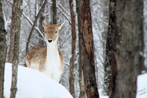 IMG_53_Tiff _ok_bambi
