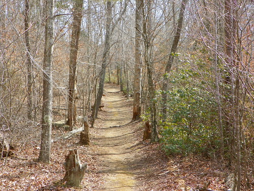 virginia unitedstates hollidaylakestatepark forestore