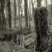 Öfter Wald #7