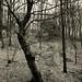Öfter Wald #9a