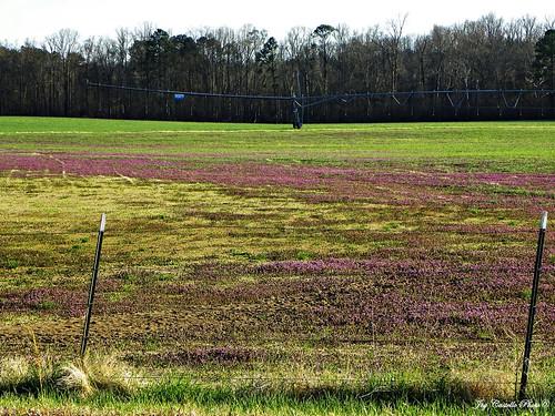 flowers georgia system farms irrigation murraycounty march122011 fieldspastures
