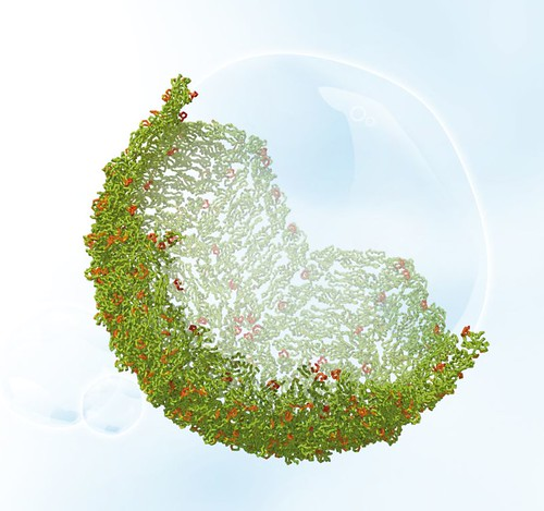 Dengue virus's proteins