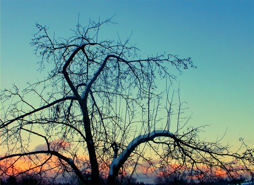 schnee winter sunset sky snow tree evening hiver january baum greenfieldma