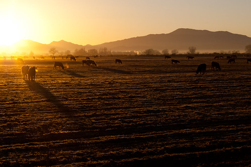 sunrise farm nevada country goldenhour yerington yeringtonnevada