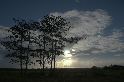 trees silhouette dawn barceloneta risingsun