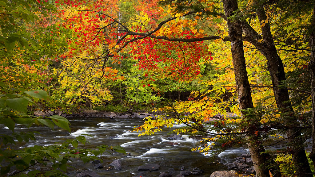 Autumn along Oxtongue River