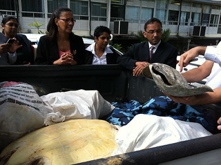 Trinidad and Tobago Government Ministers meet rescued sea turtle