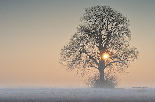 SINGLE FOGGY TREE
