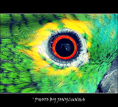O OLHO DO BRASIL - The eye of Brazil