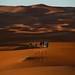 Erg Chebbi dunes (Tim Melling)