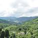 Boh Plantations panorama